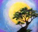 A Bonsai Moonscape